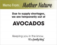 Avocado Shortage - PDF