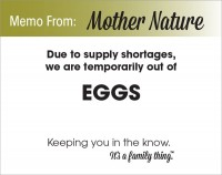Eggs Shortage - PDF